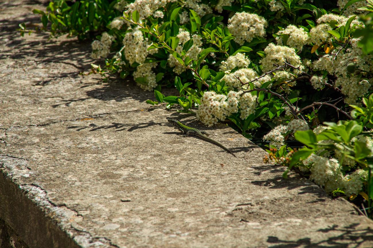 fiesole florenz italy