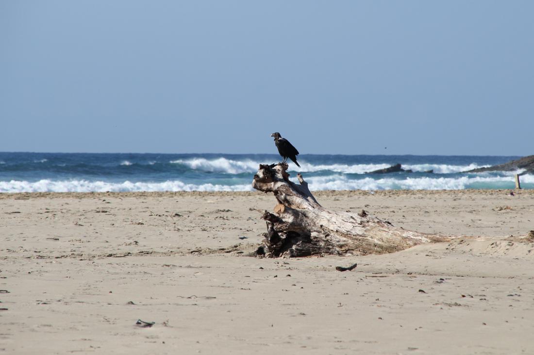 strand-vogel-baumstamm