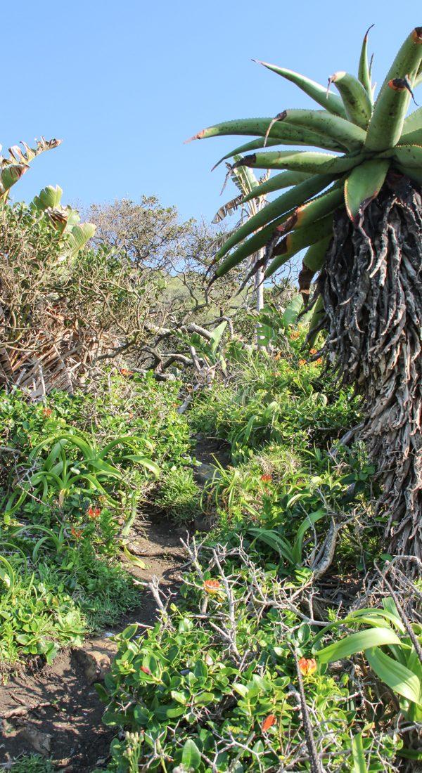 third-beach-dschungel-pflanzen