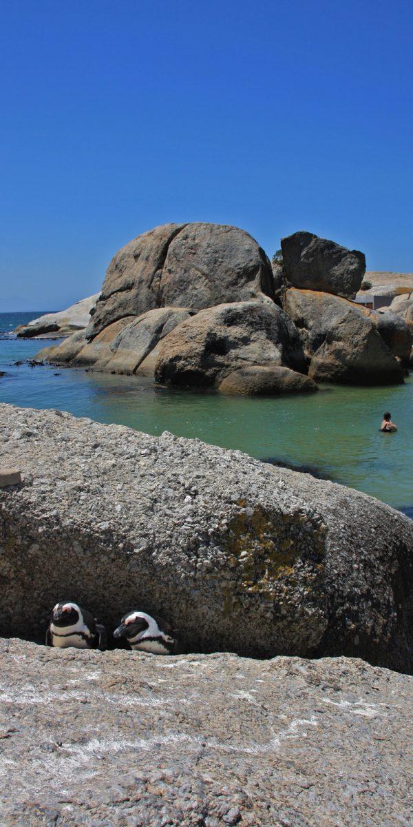 simons's town pinguin strand