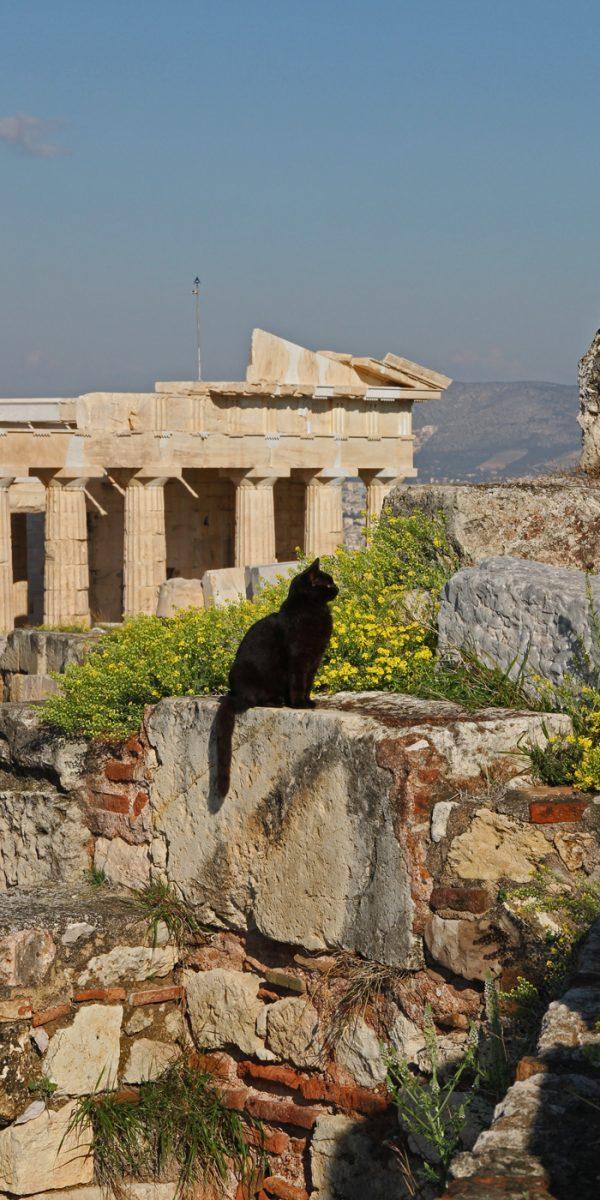 katze akropolis athen