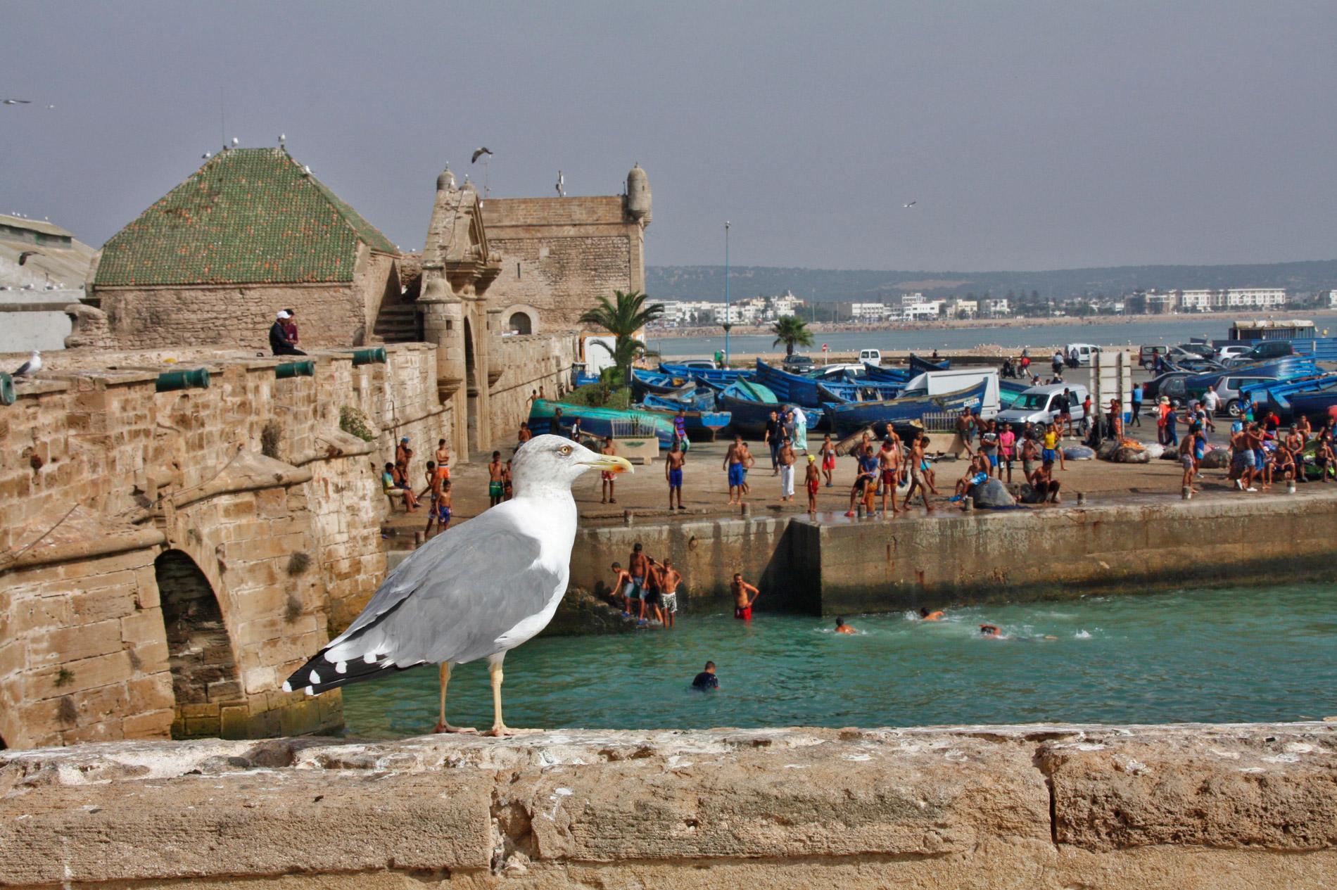 hafen essaouira marokko