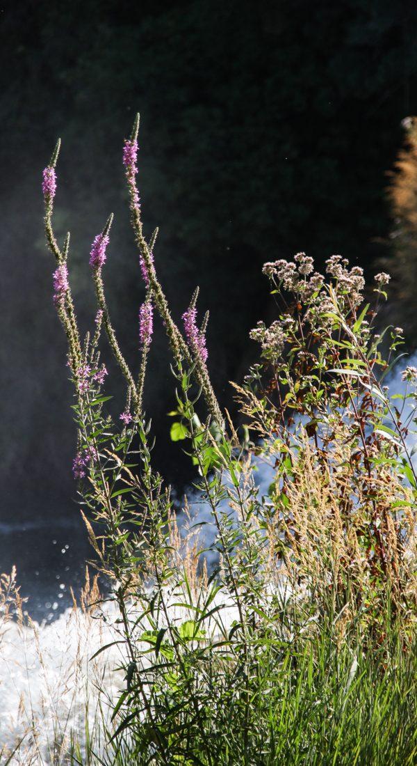 krka-pflanzen-wasser