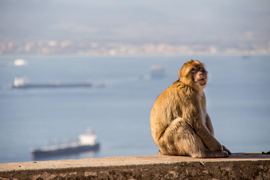 gibraltar-affe-hafen