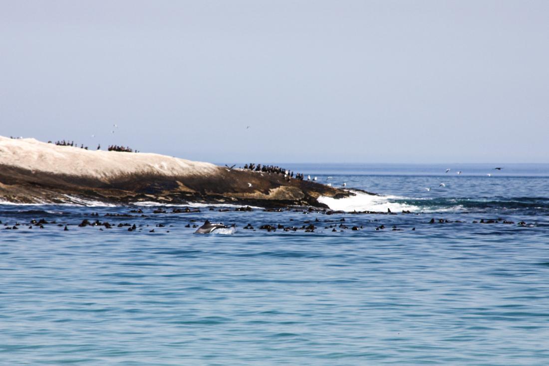 camps-bay-strand-delfin